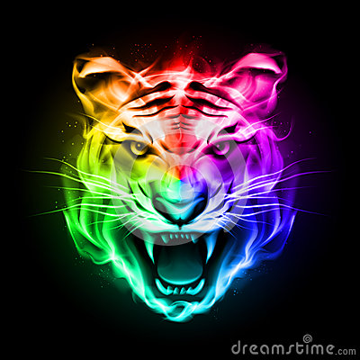 photography business cards head tiger colorful fire blazing spectrum black background 33566612